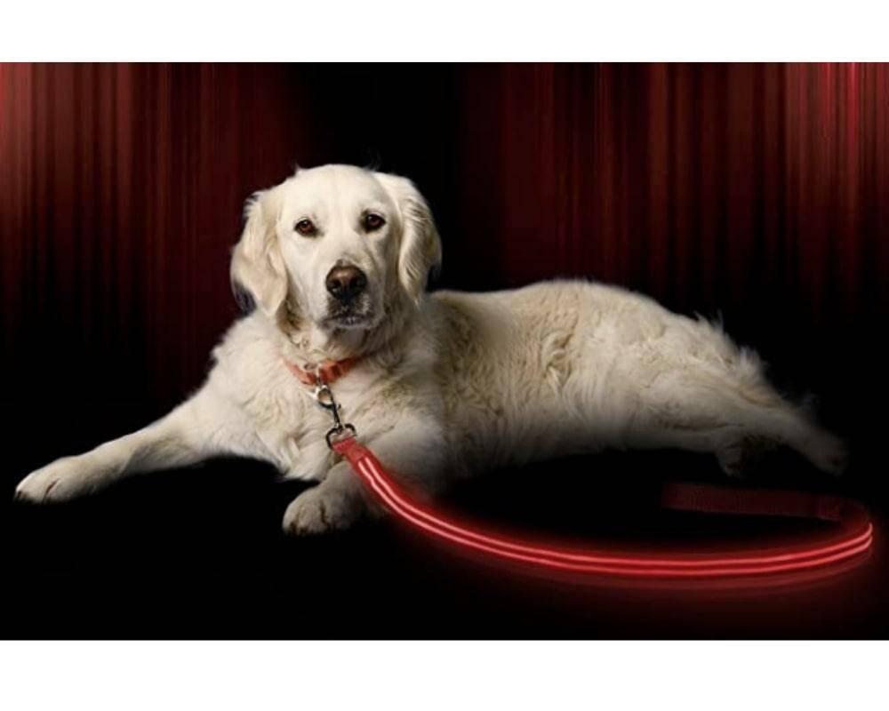 LED Dog Leash